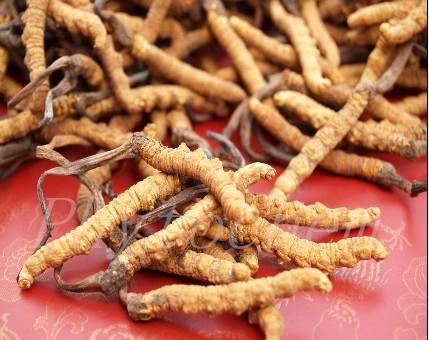 Rosemary Extract Antioxidant