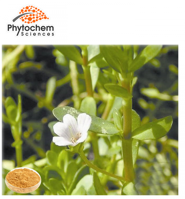 Bacopa Leaf Extract