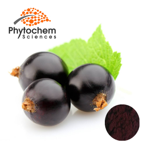 Black Currant Extract powder