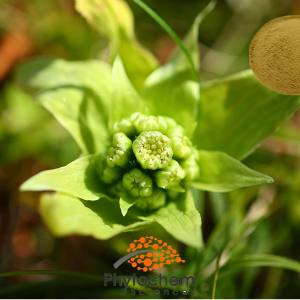 Butterbur extract powder