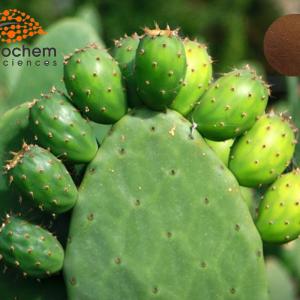 Cactus plant ectract