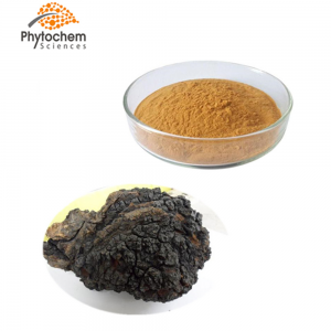 Chaga Mushroom extract powder