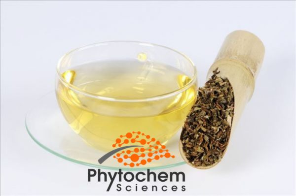 Dandelion extract tea weight loss
