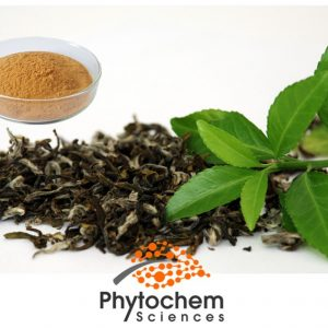 Green tea extract powder