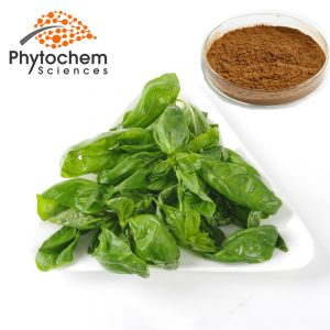 Holy Basil powder extract