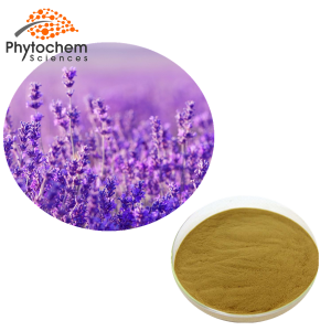 Lavender extract powder