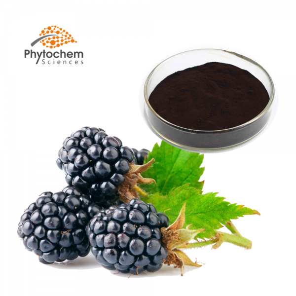 Mulberry fruit powder extract