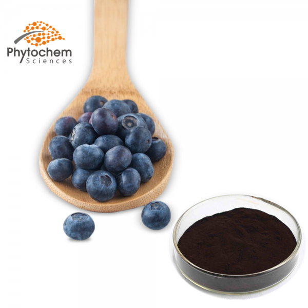 blue berry powder extract