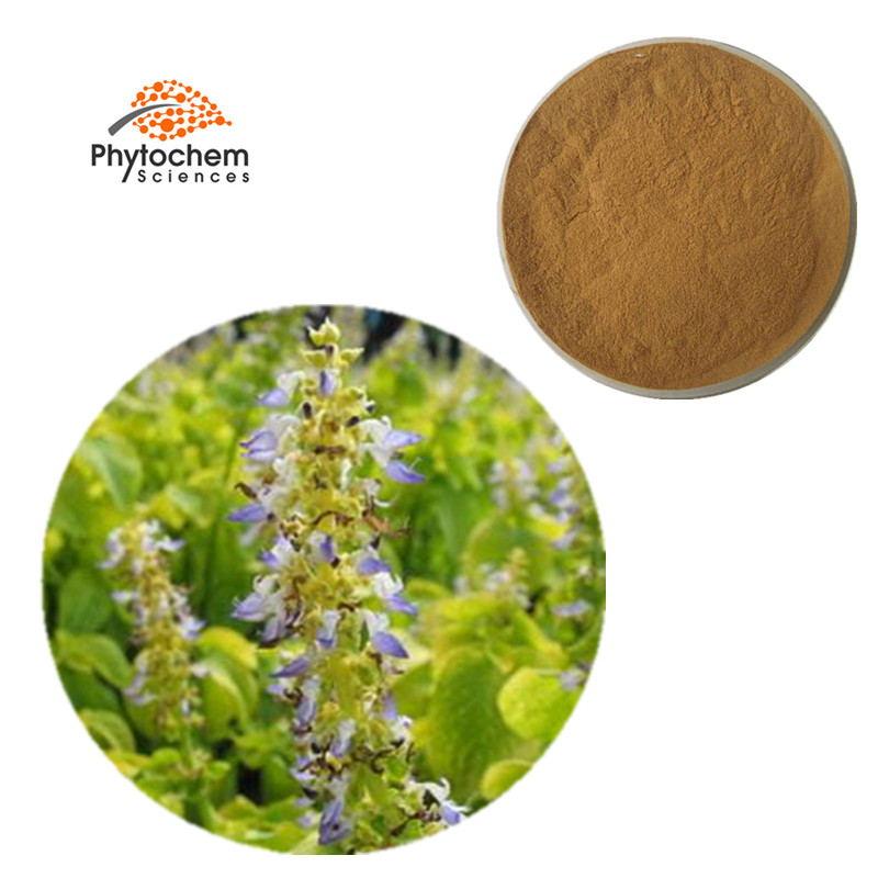 coleus forskohlii powder