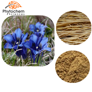 gentian powder extract