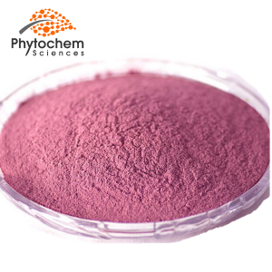 Pitaya Powder