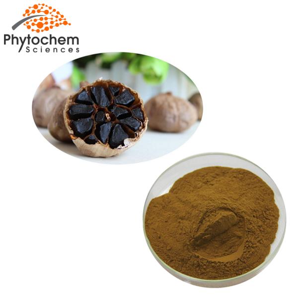 black garlic extract benefits