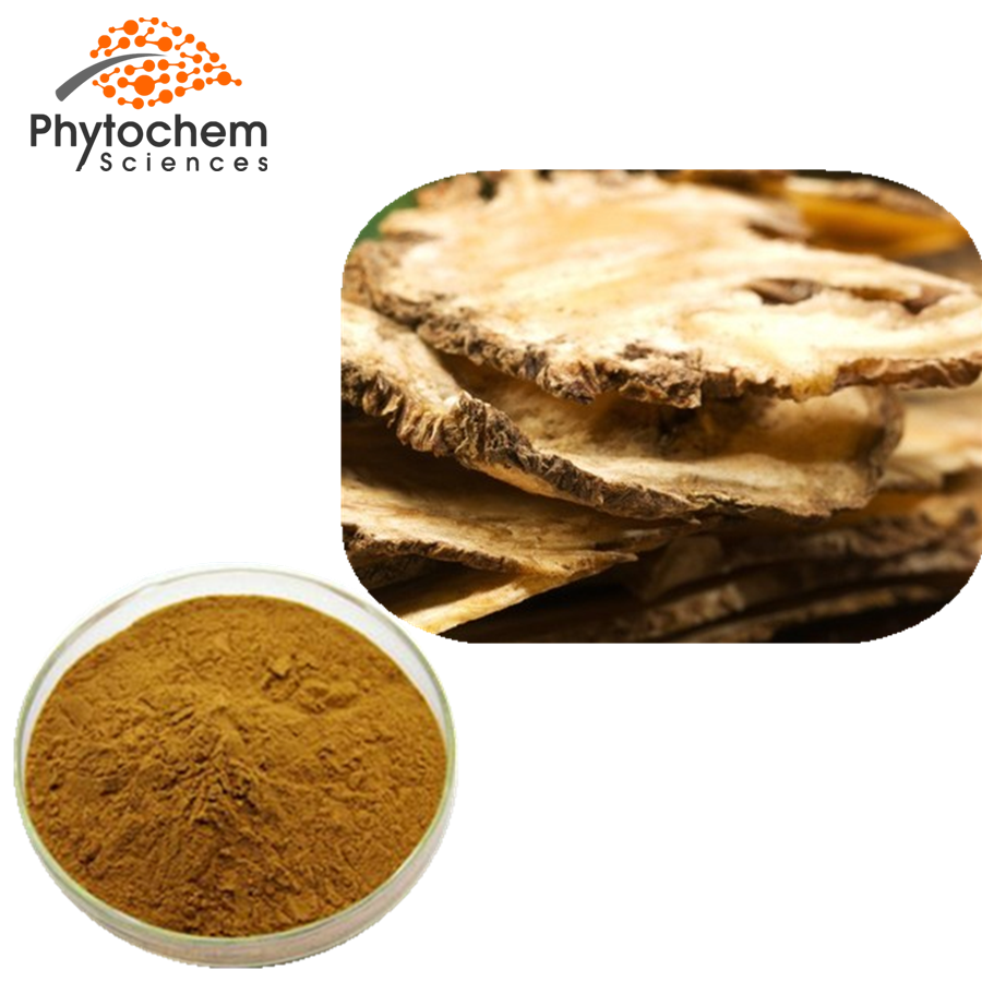 Angelica Powder Extract