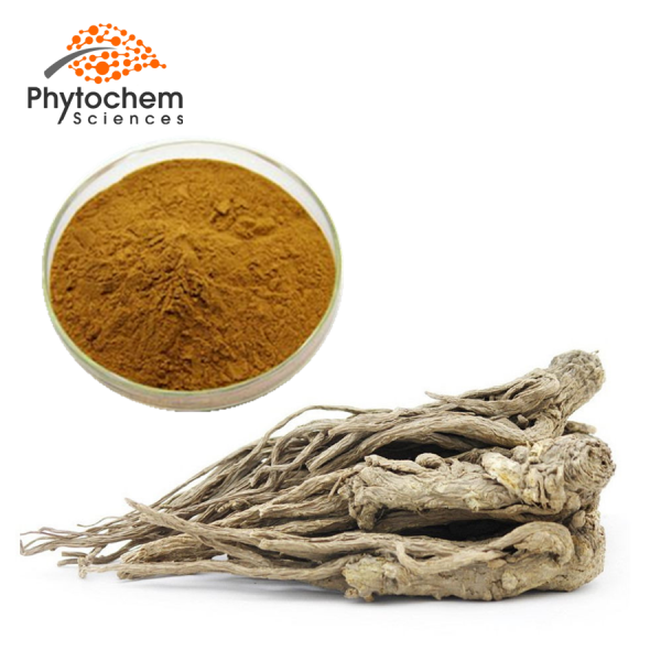 Angelica Extract Powder