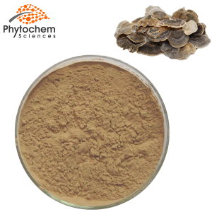 Coriolus Versicolor Powder