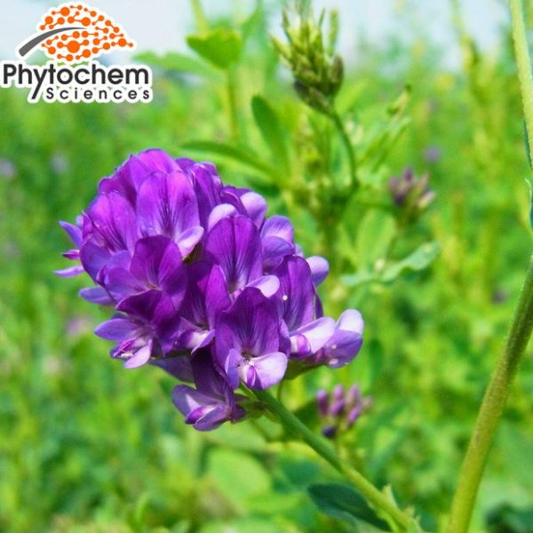 Natural Alfalfa Extract