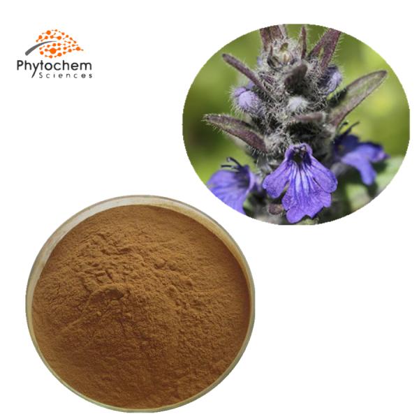 ajuga turkestanica extract powder