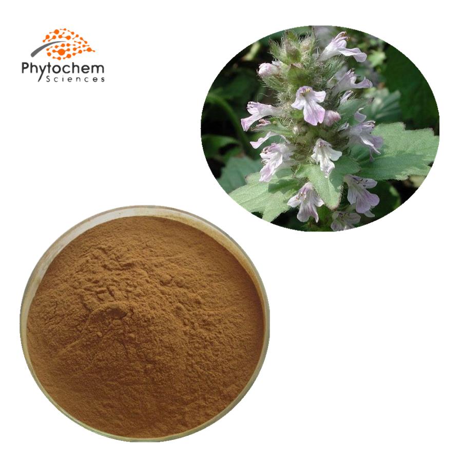 ajuga turkestanica extract supplement