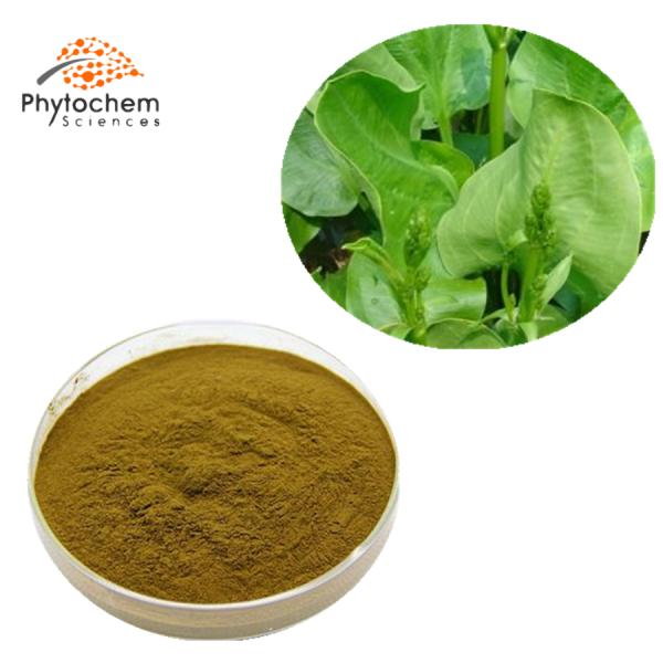 alisma orientale extract powder