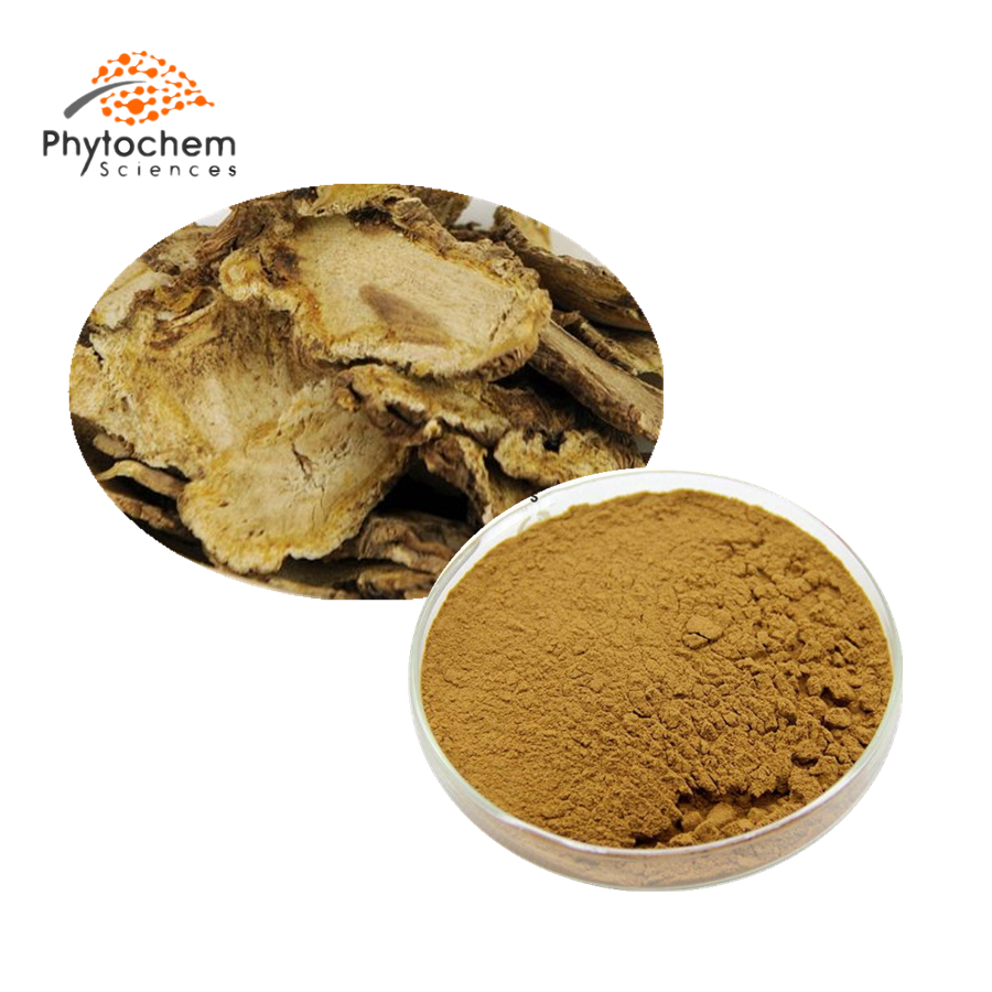 angelicae extract powder