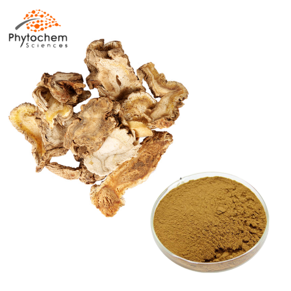 angelicae pubescentis extract powder