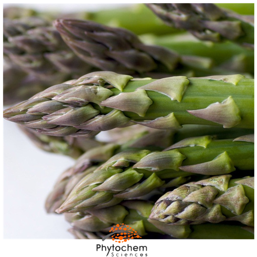 asparagus officinalis extract benefits