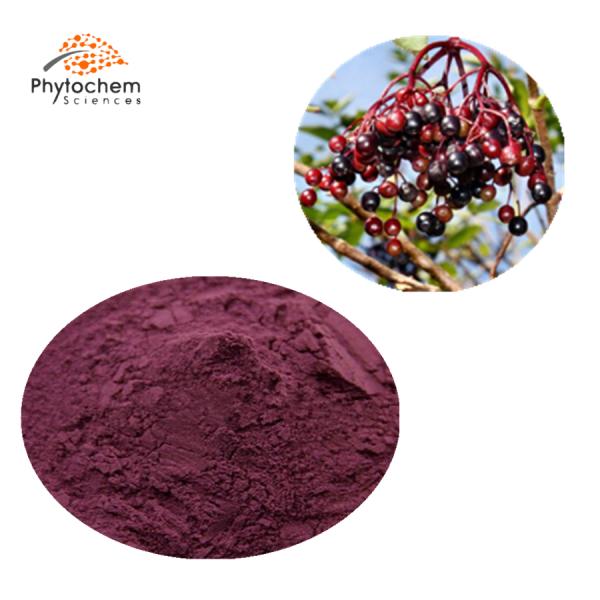 black elderberry extract