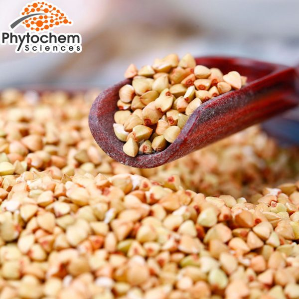 buckwheat extract supplement