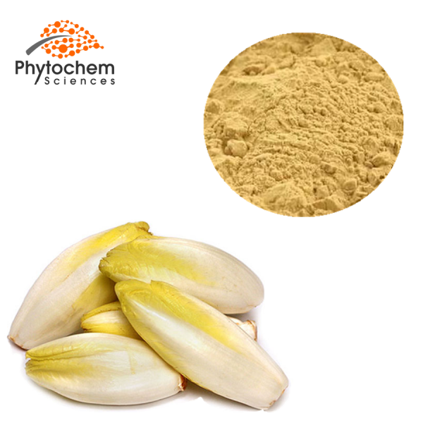 chicory extract powder