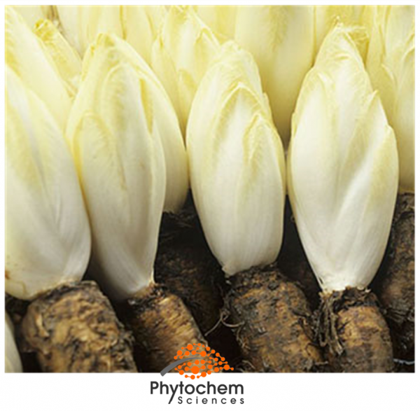 chicory root extract benefits