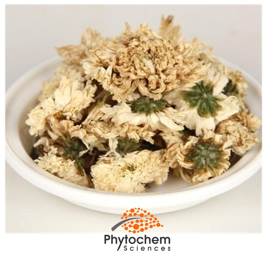 chrysanthemum extract supplement