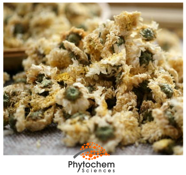 chrysanthemum extract uses