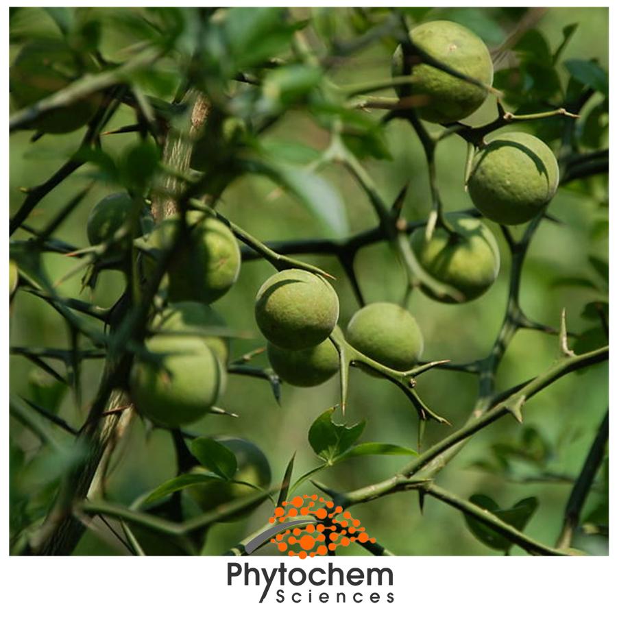 citrus aurantium extract benefits
