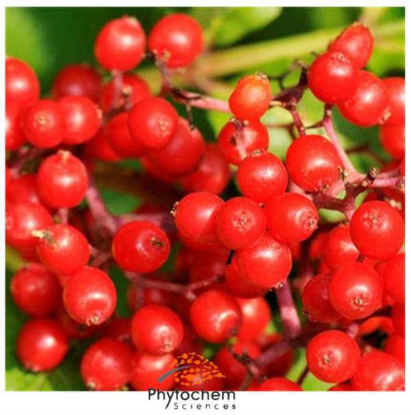 elderberry extract for colds