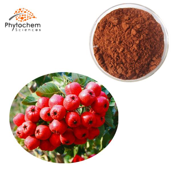hawthorn leaf extract