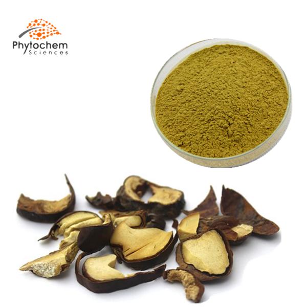 horse chestnut extract supplement