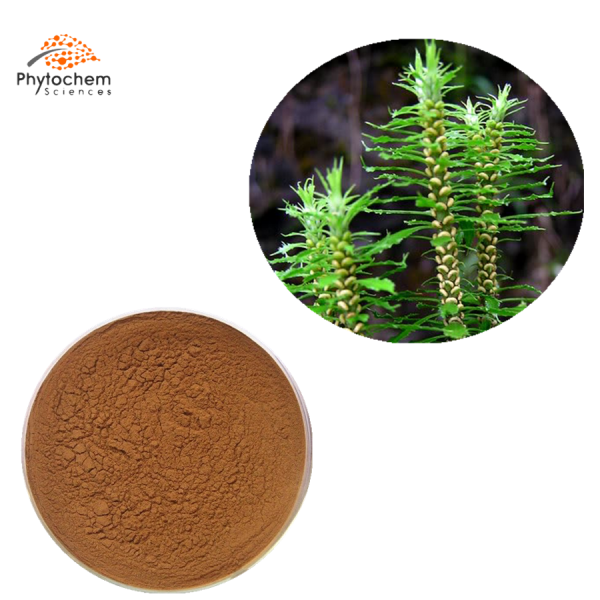 huperzia serrate extract powder