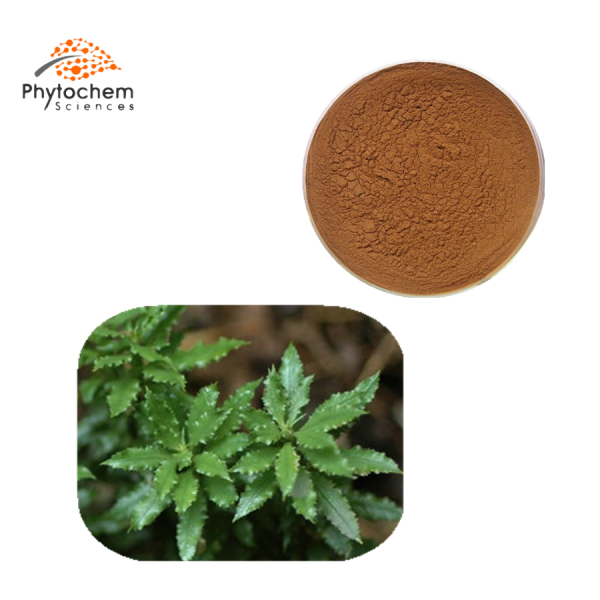 huperzia serrate powder extract