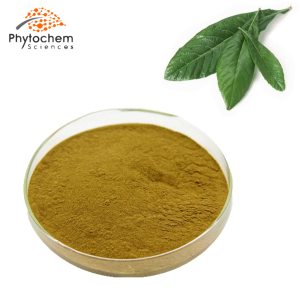 loquat leaf powder extract