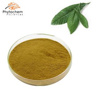 loquat leaf powder extract