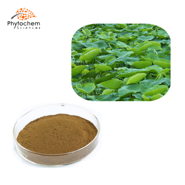 lotus leaf extract powder