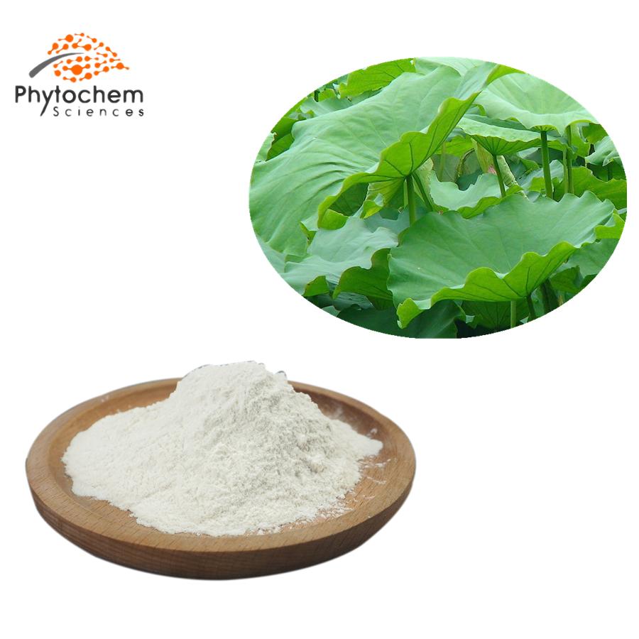 lotus leaf powder extract