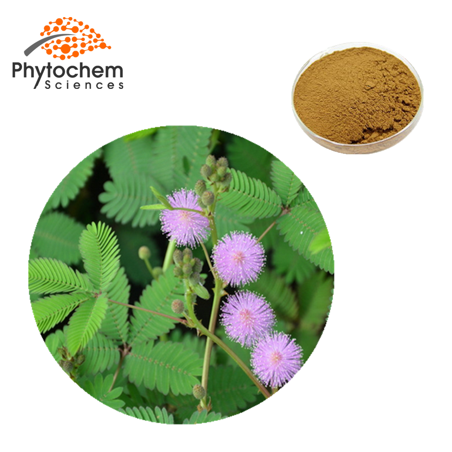 mimosa pudica extract benefits