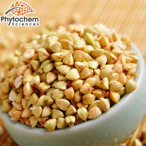 organic buckwheat extract